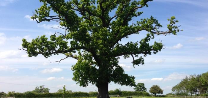 150605 Veteran Tree